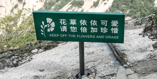 (Interesting Differences/Shared Humanity)  Grass is for…