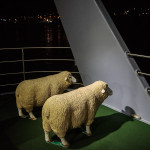 MONA Roma catamaran also transports sheep to and from the gallery