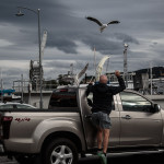 Harbours, seagulls and humans - not always a good mix